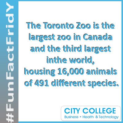 Fun facts for City College Toronto